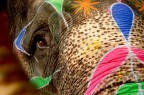 Wildlife Tourism in India and Nepal